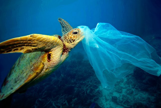 Plastic bags harmful to human health and the environment